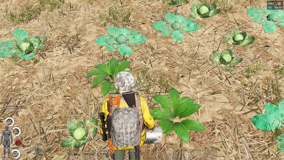 《人渣》野外野果采集种类一览