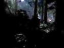 古墓丽影9 .Tomb Raider:2013.全弓箭攻略.峰顶森林