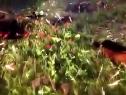 3DMGAME《天国:拯救》PS4版预告片公布