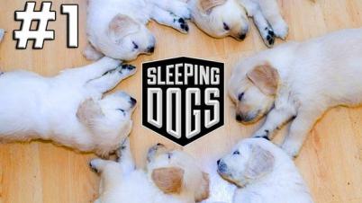 【DEV】热血无赖 Sleeping Dogs
